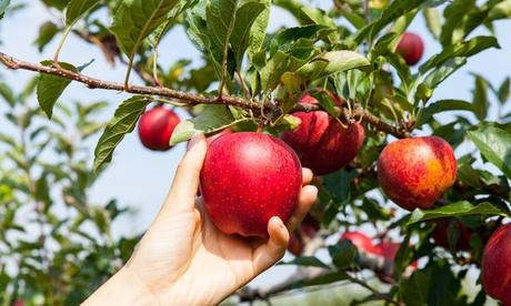 Curso online de plantas frutales por 19,95 € en MSH Formación
