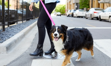 15, 30, or 60-Minute Walk with Meet and Greet from Best Pet Services (Up to 40% Off)