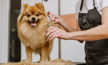 Up to 30% Off Grooming Services at Sky Dog Grooming and Care