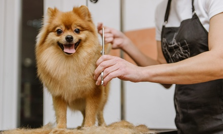 One Bath Package for a Small, Medium, Large, or X-Large Dog at Le Chien Pet Spa (Up to 56% Off)