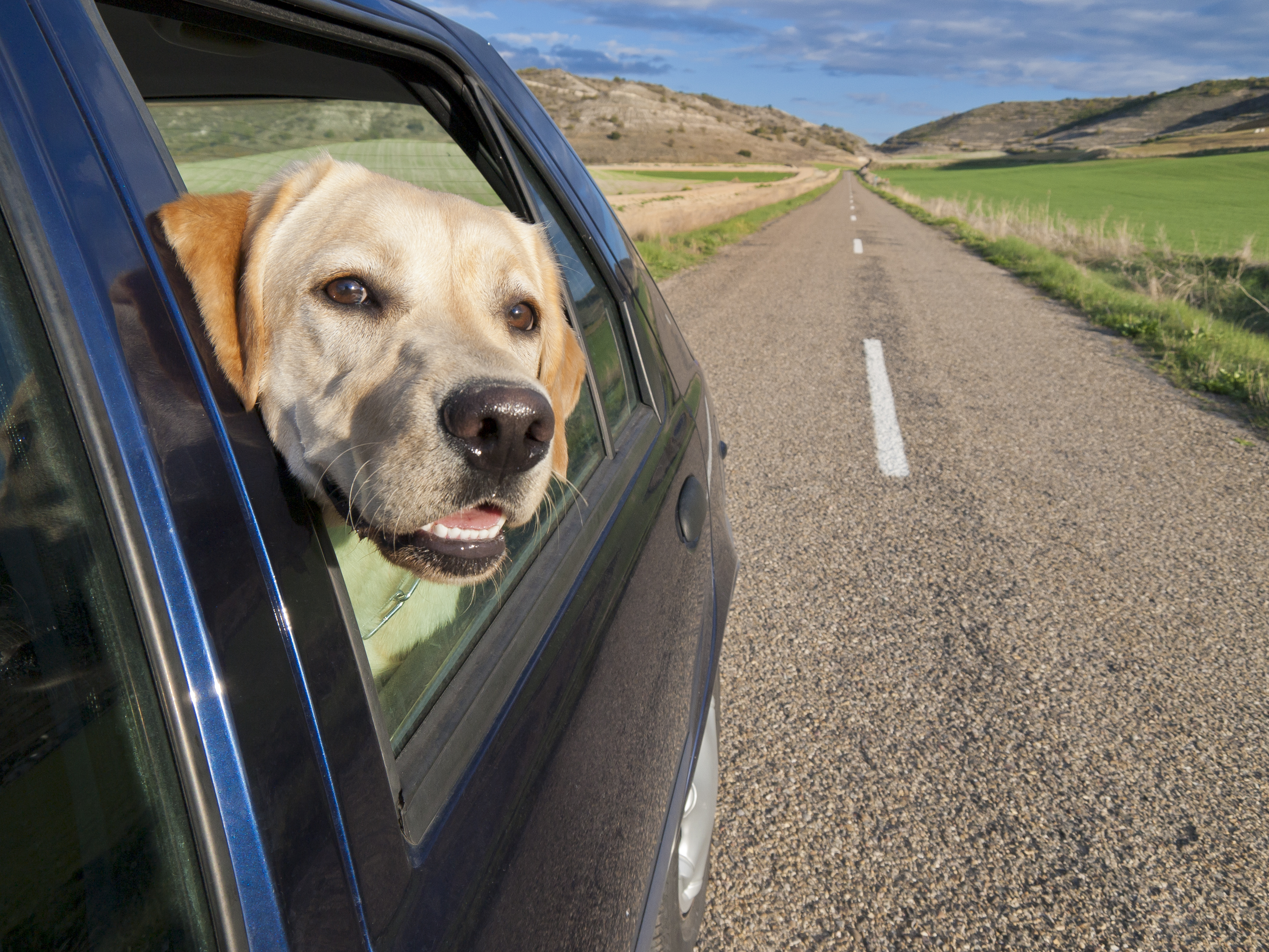 Summer is the perfect time to hit the road and explore new sights with your pup. Here are a few unique activities you don't want to miss.