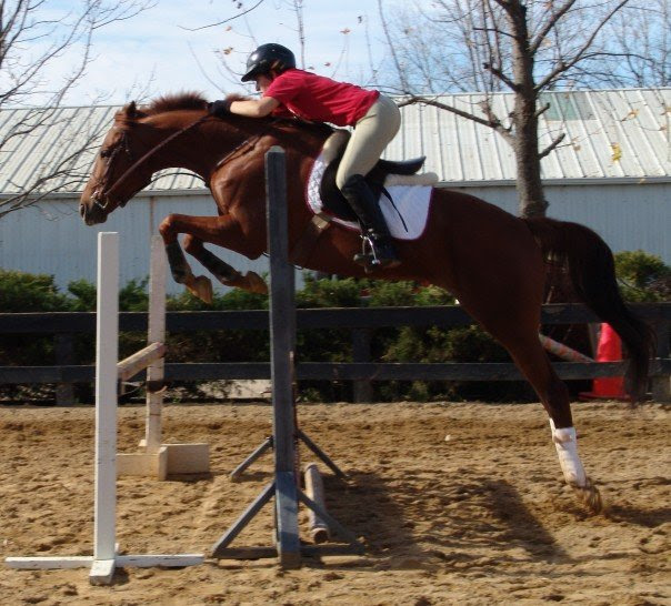 Fawkes the Race Horse