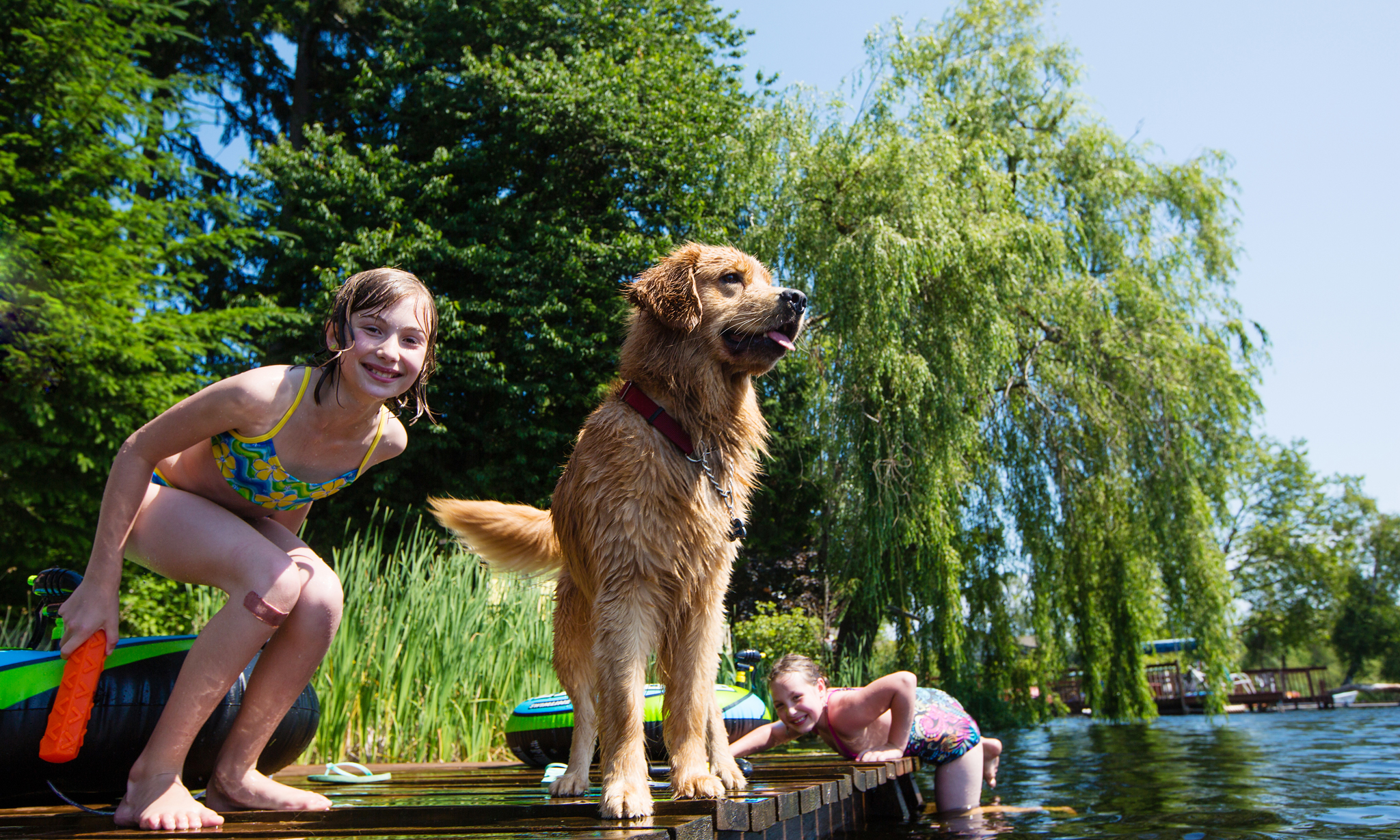 cheap things to do with dogs, pet-friendly activities, dog-friendly vacations