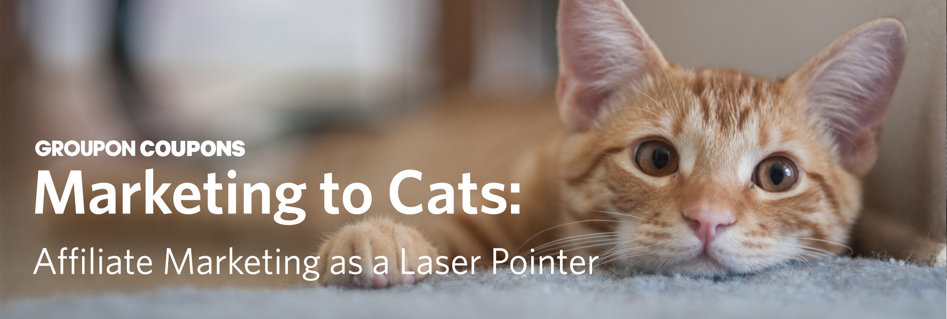 Marketing to Cats: A Cautionary Tale