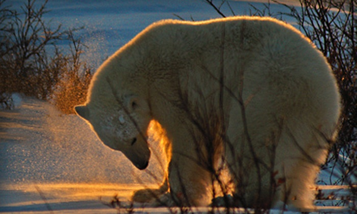 """Defenders of Wildlife: $22 for Adopt a Polar Bear, Including Polar-Bear Plush Toy, Wildlife Activity Book, 5"""" x 7"""" Photo, and Personalized Certificate of Adoption ($45 Value)"""