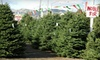 ABC Tree Farms - Multiple Locations: $20 for $40 Worth of Christmas Trees, Wreaths, and Garlands at ABC Tree Farms