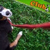 Club K-9 - Multiple Locations: $9 for $25 Worth of Boarding, Training, Self-Serve Washing, and Other Services Plus a Dog Evaluation at Club K-9 ($43 Total Value)
