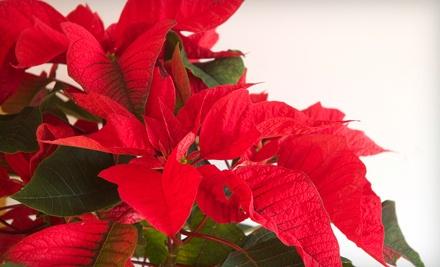 $40 Groupon to Boca Raton Florist - Boca Raton Florist in Boca Raton