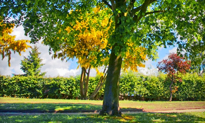 Premium Tree Protection - Minneapolis / St Paul: Tree Fertilization or Disease Treatments from Premium Tree Protection (Up to 60% Off). Four Options Available.