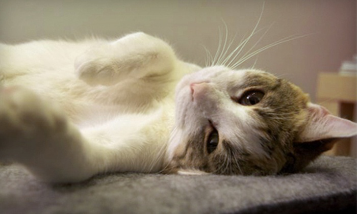 SPCA Serving Erie County - Multiple Locations: Full Adoption Fees for One Cat or Dog at the SPCA Serving Erie County in Tonawanda (Up to 69% Off)