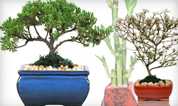 Eve's Garden Gifts - Land O Lakes: $15 for $30 Worth of Bonsai Trees, Lucky Bamboo, and Feng Shui Products  at Eve's Garden Gifts