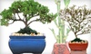 Half Off Bonsai Trees & Feng Shui Items at Eve's Garden Gifts
