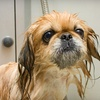 Half Off Dog Grooming at Paws & Claws