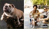 Picture Perfect Pets - Boston: $45 for a $100 Groupon to Picture Perfect Pets