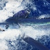 Up to 60% Off Five-Hour Fishing Trip