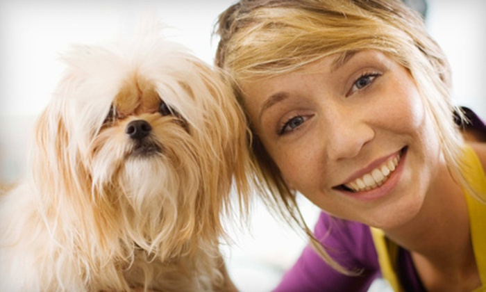 Mid City Animal House - New Orleans: $25 for $50 Worth of Doggy Daycare, Boarding, and Baths at Mid City Animal House
