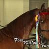 Four Willows Farm - Clark: $19 for 30-Minute, Semi-Private Horseback-Riding Lesson