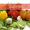 Half Off Healthy Fare at Harvest Table in Newark