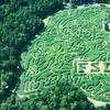 Half Off Corn-Maze Adventure in High Point