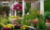 Half Off Flowers and Plants in Dix Hills