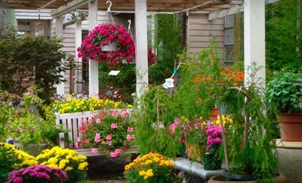 $30 Groupon to Garden Country Nursery - Garden Country Nursery in Dix Hills