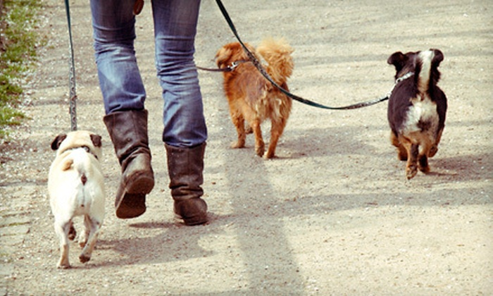 Dan's Dog Walking and Pet Sitting - Port Washington: 5 or 10 Dog Walks or $40 for $100 Worth of Pet Services from Dan's Dog Walking and Pet Sitting
