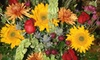 The Plant People - Green Bay: $15 for $30 Worth of Gifts and Fresh Plants at The Plant People