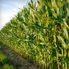 Up to 53% Off Corn Maze for 2 or 4 in Lambertville