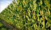 Howell Farm Corn Maze - Lambertville: Up to 53% Off Corn Maze for 2 or 4 in Lambertville