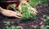 Healthy Gardens and Supply - Ridley Park: $75 Worth of Gardening Supplies