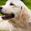 Half Off Canine Vaccinations and Heartworm Test