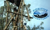 Positive Adventures - Multiple Locations: $69 for a Four-Hour Session on the Ropes Course at Positive Adventures ($150 Value)