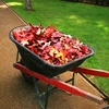 Up to 60% Off Fall Cleanup or Lawn-Prep Package