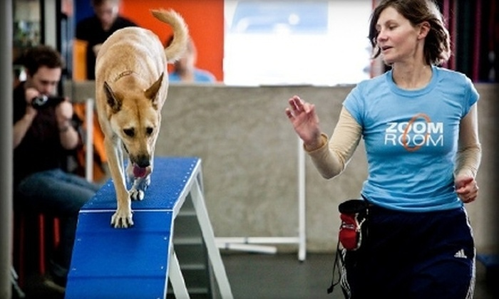 Zoom Room - Ballantyne/South Charlotte: Six-Week Dog-Training Class or One Drop-In Class at Zoom Room (Up to 57% Off)