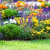 Up to 53% Off at Forest Landscape Nursery Inc.