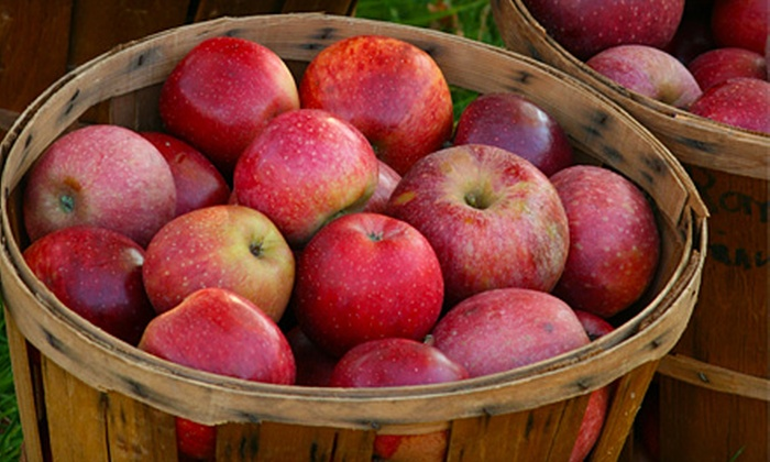 Johnson's Orchards - Bedford: $5 for 10 Pounds of Pick-Your-Own Apples at Johnson's Orchards in Bedford ($10 Value)