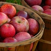 $5 for 10 Pounds of Apples in Bedford
