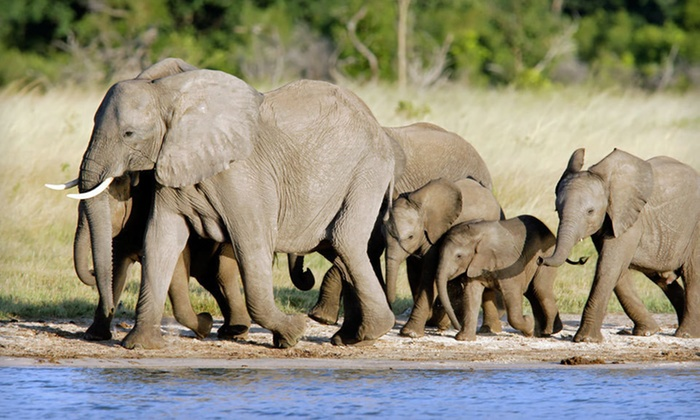 11-Day Tour of Africa and Safari  - Cape Town: 11-Day Tour Through South Africa, Zimbabwe, and Botswana, and Safari from Africa Answers