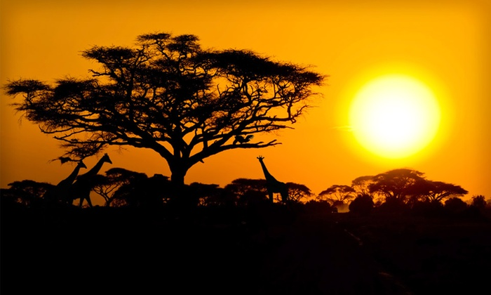 Odyssey Safaris - Middlesex: Eight-Day Kenyan Safari with Meals, Transportation, and Roundtrip Airfare from JFK or IAD from Odyssey Safaris