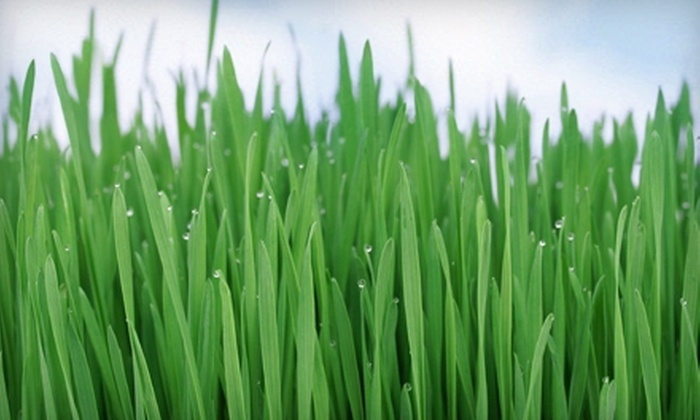 Scapes Environmental Design - Houston: Lawn-Mowing Services from Scapes Environmental Design. Two Options Available.