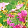 $10 for Plants, Shrubs, and Trees in Lake Worth