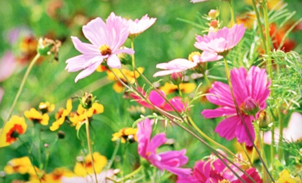 $20 Groupon to Indian Trails Native Nursery - Indian Trails Native Nursery in Lake Worth