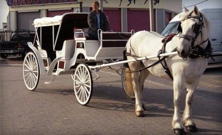 Carousel Horse Farm - Carousel Horse Farm in Freeport