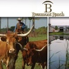 62% Off Beaumont Ranch Cowboy Experience