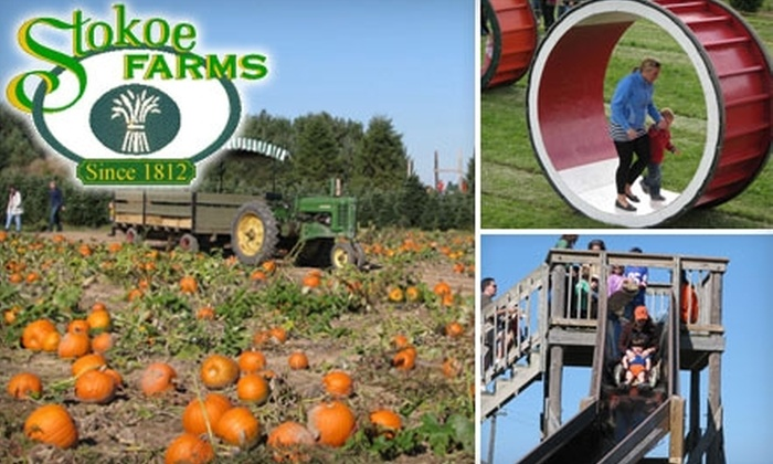 Stokoe Farms - Wheatland: $8 for Two Tickets to the Pumpkin Patch and Harvest Fest at Stokoe Farms ($16 Value)
