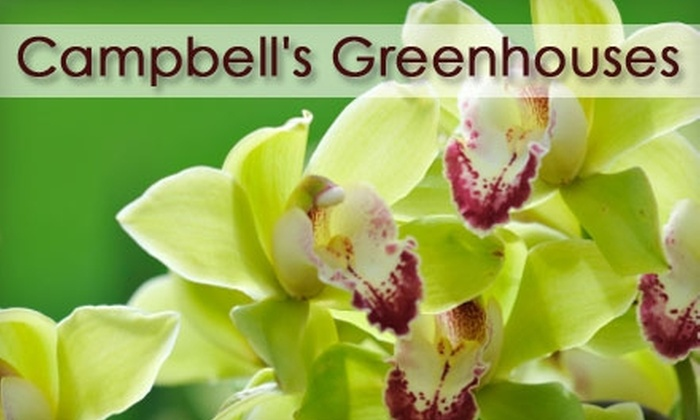 Campbell's Greenhouses and Dilworth's Little Secret - Charlotte: $25 for $50 Worth of Plants at Campbell's Greenhouses or Home and Garden Goods at Dilworth's Little Secret