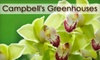 Campbell's Greenhouses and Dilworth's Little Secret - Multiple Locations: $25 for $50 Worth of Plants at Campbell's Greenhouses or Home and Garden Goods at Dilworth's Little Secret
