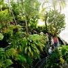 Myriad Botanical Gardens – Up to 51% Off Membership