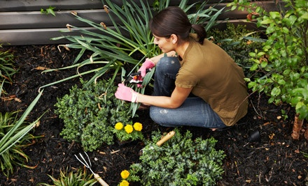 $35 Groupon for Gardening Supplies and Tools - Healthy Gardens and Supply in Prospect Park