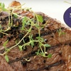 Up to 53% Off Greek Fare at North Towne